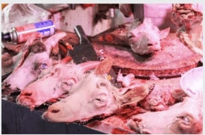 Animals slaughtered in close proximity to humans, food, and other species creates unsanitary spillover of bacteria, and is a hotbed for cross contamination