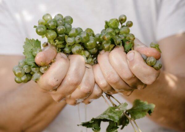 Austria-Grapes-768x462